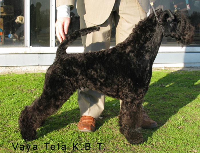 Expo Burdeos Kerry Blue Terrier 2011