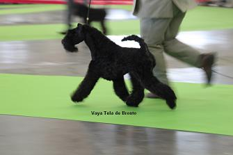 Expo Paris Bronto Vaya Tela Kerry Blue Terrier