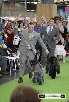 Expo Paris 2011 Jus Vaya Tela De Kerry Blue Terrier