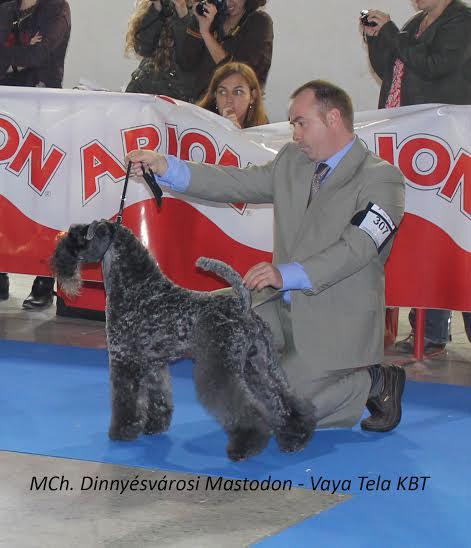 Exposicion Especial Kerry Blue Terrier 2015