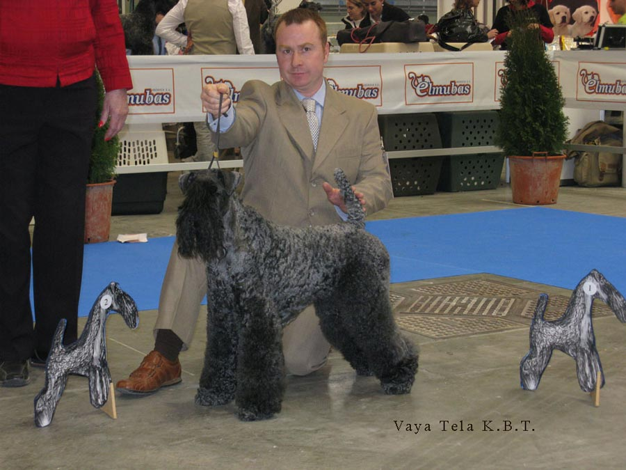 Exposicion Kerry Blue Terrier 2009